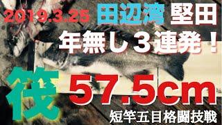 デニム姿の時は来たっ!短竿五目格闘技戦 Vol.8は春の遠征、和歌山県南...