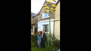 RTÉ Radio 1 Mooney Show | Agave Americana