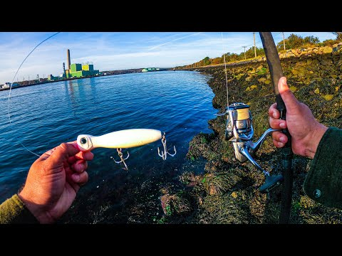 Throwing a Big Popper in the Cape Cod Canal