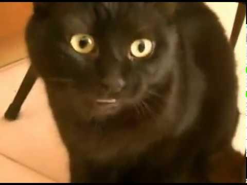 RARE BLACK CAT