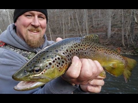 New For 2016!  Central PA Winter Trout Fly Fishing!  Non-Stop Action!