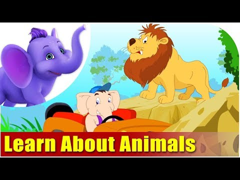 Let's Learn About Animals - Preschool Learning