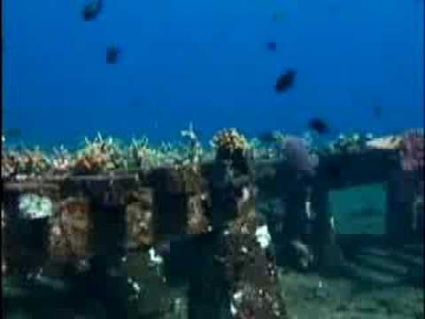 United Nations TV - Bali's Coral Reefs