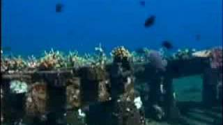 United Nations TV – Bali's Coral Reefs