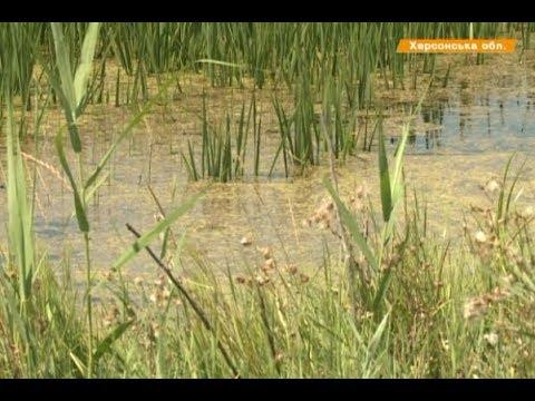 Вопрос: Можно ли выращивать рис в Центральном районе России?