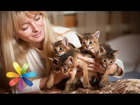Топ-5 самых дорогих пород кошек, которые вам не нужны! - Все буде добре - Выпуск 590 - 28.04.15