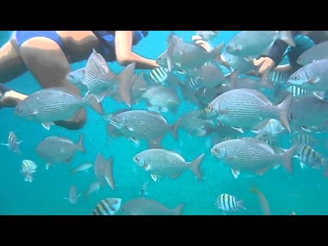 Cuba 2012 - Plongée en apnée à la plage de Varadero