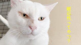 外の生活からすんなり馴染めた白猫くん