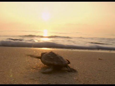 Tortuga - Die unglaubliche Reise der Meeresschildkröte - Trailer ...