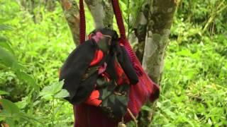 Nepali Village Life with Sarala Thapa part 5