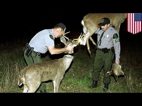 Robo-Deer sting: How robotic deer help US wildlife officials catch illegal hunters - TomoNews