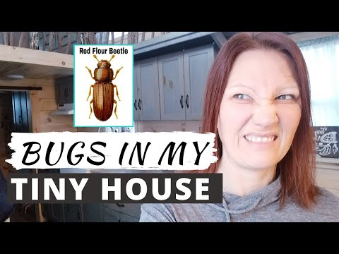 BUGS IN MY TINY HOUSE: Ways To Get Rid Of Red Flour Beetles