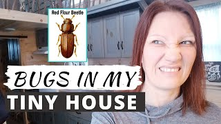 BUGS IN MY TINY HOUSE: Some Ways To Get Rid Of Them