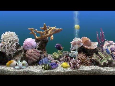 Aquarium Software on PC - My top 5