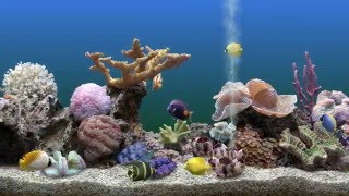 Aquarium Software on PC - My top 5