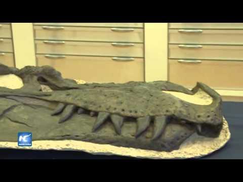 Anuncian descubrimiento de nuevo dinosaurio