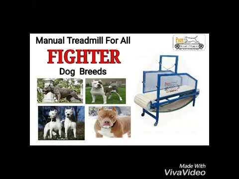 DOG SHOW 2018-PACE DOG TREADMILL & EQUIPMENTS- CALL- +91-9888066321