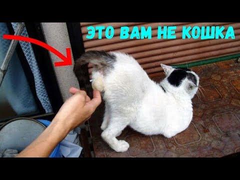 Кошки смешные коты приколы за 18 сентября