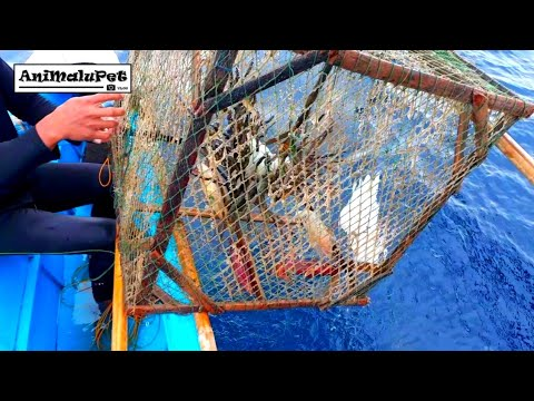 AWESOME SQUID TRAP! Catch Many Squid | Nakahuli Ng Maraming Pusit