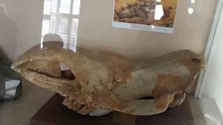 Поход в археологический музей. Одесса.