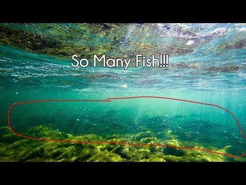 Dolores Colorado Salmon And Trout! - McFly Angler Episode 59