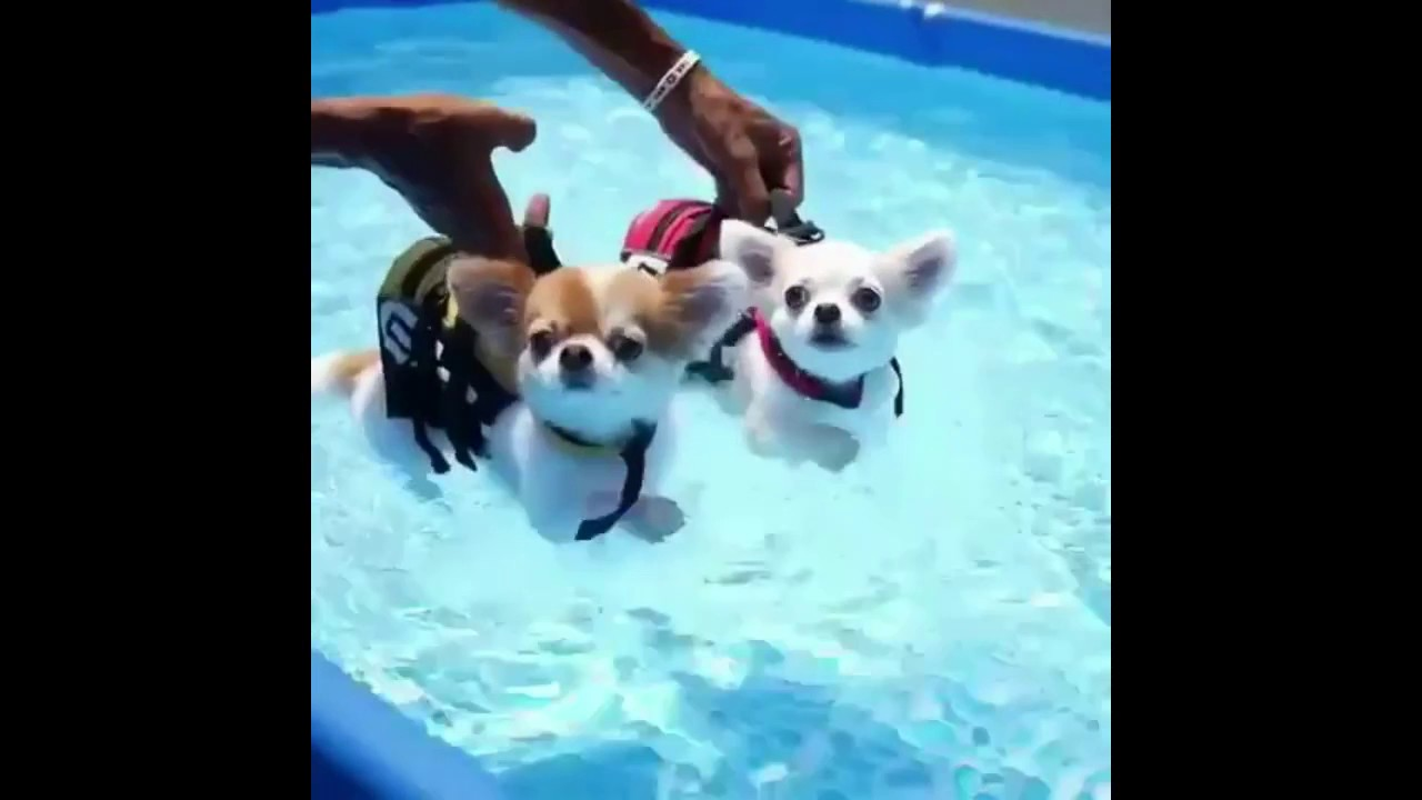 Cute Dog Videos Youtube