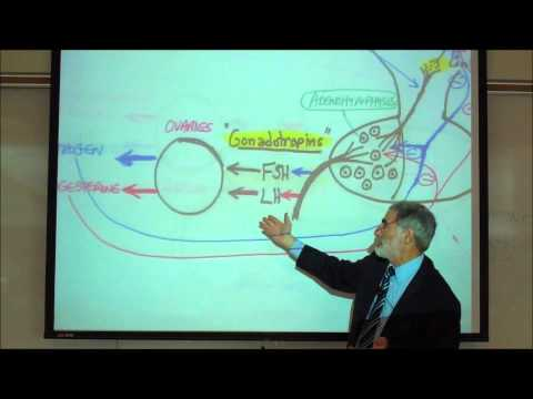 FSH & LH AND THE REGULATION OF THE REPRODUCTIVE ORGANS by Professor Fink