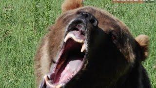 Niedźwiedź zaatakował drwala w Jałowym w Bieszczadach