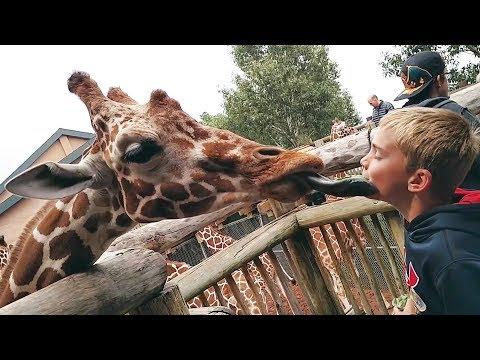 Animales divertidos en Zoo vs Compilación de los niños
