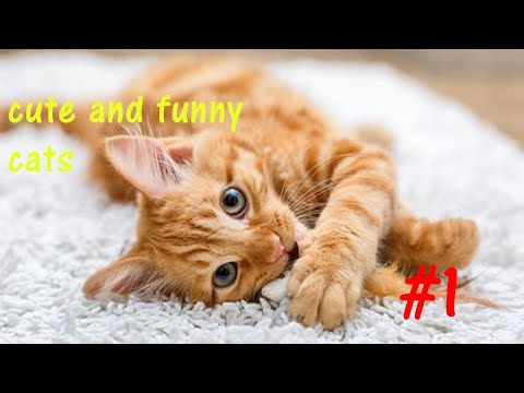 funny and cute cats compilation videos #1 best videos