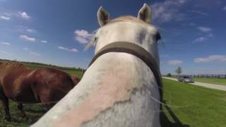 Visual Tour of a Horse Farm in Paris, Kentucky