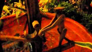 Bamboo Water Wheel - กังหันน้ำไม้ไผ่