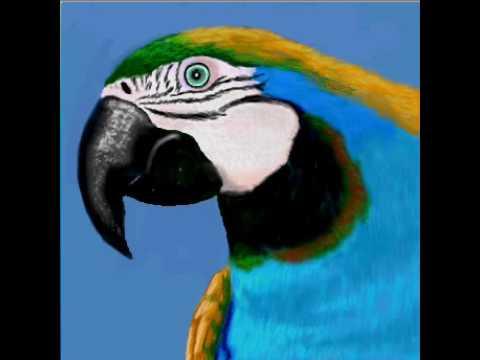 iSketch Parrot