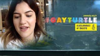 Gay Turtle Kampanyasi Hakkinda Elestiri Uluslararasi Af Orgutu
