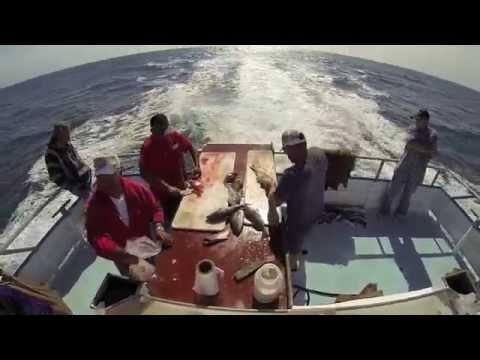 Newport landing fishing youtube for Newport landing fish report