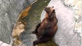 Смотреть бесплатно приколы Самые  добрые животные  Funniest Animals