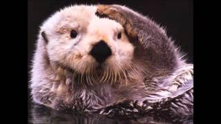 Native American Flute Music - Otter Song Movie