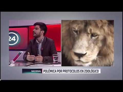 Mauricio Serrano rechazando los zoológicos en canal 24 Horas
