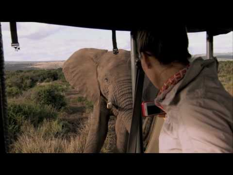 welcome-to-south-africa:-safari