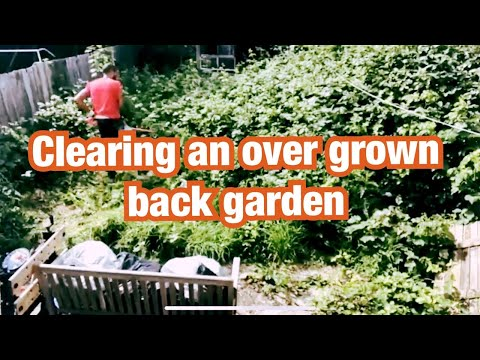 How To Clean And Clear An Overgrown Garden In London