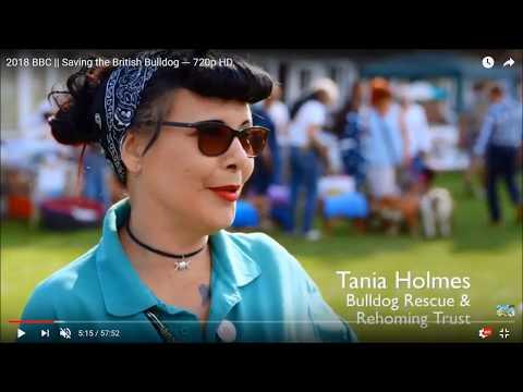 THE BULLDOG - Past, Present And Future - A Bulldog Rescue Educational Film