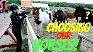 CHOOSING OUR HORSES Day 236 (08/25/17)