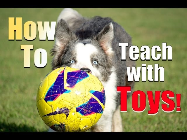 How to Reward your Dog with TOYS Instead of Food!