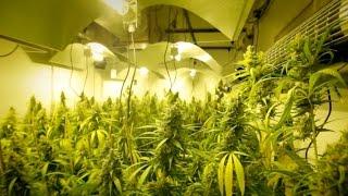 Tuck Talk Episode 9: Building Your Grow Room