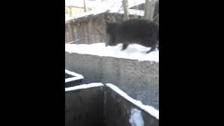 Падение кота