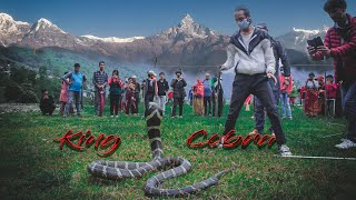 "Lockdown ""King Cobra World's Longest Venomous Snake "" 
