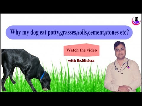 Why Dog Eat Potty/grasses/stones Etc?