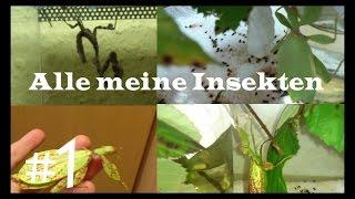 Alle meine Insekten #1 | Insekten TV