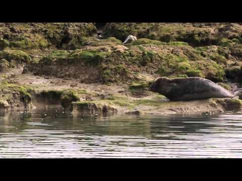 Seals spotted in Newtown Creek, IOW