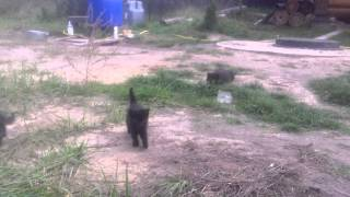 Котята сироты, Воронеж